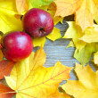 Red apples on autumn maple leaves — Stock Photo