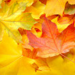 Maple leaves background — Stock Photo #34716897