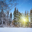 Stock Photo: Winter landscape on a sunset