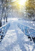 Beautiful winter landscape with a bridge — Stock Photo