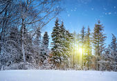 Winter landscape on a sunset — Stock Photo