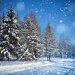 Beautiful winter landscape with snow covered trees — Stock fotografie
