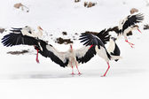 Beautiful storks at the park outdoors — Stock Photo