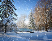 Beautiful winter landscape — Photo