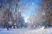 Beautiful winter landscape — 图库照片