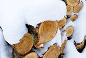 Snow covered woodpile close — Stock Photo