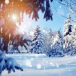 Snow-covered tree branch at sunset — Stock Photo