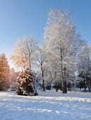 Winter landscape on a sunset — Stock Photo