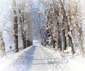 красивый зимний пейзаж с снегом покрыты деревья — Стоковое фото