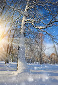 Krásná zimní krajina — Stock fotografie