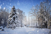 Beautiful winter landscape with snow covered trees — Stok fotoğraf
