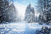 Paisagem de inverno linda com neve coberta de árvores — Fotografia Stock