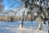 Beautiful winter landscape — Стоковое фото