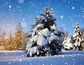 Vackert vinterlandskap med snö täckt träd — Stockfoto