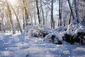 Piękny zimowy krajobraz ze śniegiem pokryte drzewami — Zdjęcie stockowe