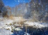 Piękne zimowe lagunowe oraz ogród — Zdjęcie stockowe