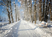 Beautiful winter landscape with snow covered trees — 图库照片