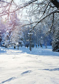 Winter forest in a frosty sunny day — Stock fotografie