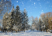 Winter forest in a frosty sunny day — Stok fotoğraf