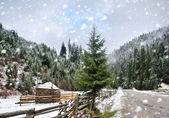 Beautiful winter landscape with pine trees — Stok fotoğraf