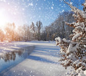 Winter landscape in frosty day — Stockfoto