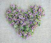 Coração de flores de tomilho de saco — Fotografia Stock