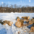 Stock Photo: Winter landscape with firewoods