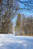 Winter forest in a frosty sunny day — ストック写真