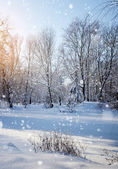 Winter forest in a frosty sunny day — Стоковое фото