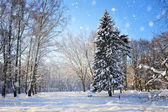 Winter park in a frosty sunny day — Stock Photo