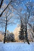 Winterwald in einen frostigen sonnentag — Stockfoto