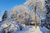 Winter park in a frosty sunny day — Foto Stock