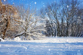 Beautiful winter landscape — Stok fotoğraf