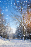 Beautiful winter landscape — Foto de Stock