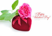 Heart-shaped Gift Box with pink rose on white background — Stock Photo