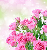 Romantic background with pink roses and bokeh lights — Stock Photo