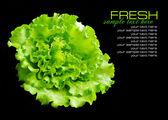 Fresh green salad isolated on black background — Stock Photo