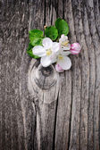 Apple blossom on a old wooden background — Stock Photo