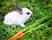 Funny baby white rabbit with a carrot in grass — Stock Photo