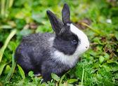 Funny baby rabbit in grass — Stok fotoğraf