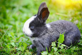 Funny baby rabbit in grass — Stock Photo