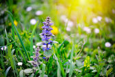 Spring meadow, natural background — Stock Photo