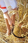 Woman reaps wheat with a sickle. Close-up — Stock Photo