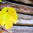 Grape Leaves over wooden background — ストック写真 #13684069