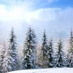 Beautiful winter landscape — Stock Photo #13775556