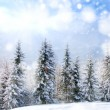 Beautiful winter landscape — Stock Photo #13775557