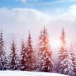 Stock Photo: Beautiful winter landscape with snow covered trees