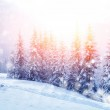 Beautiful winter landscape — Stock Photo #13775584