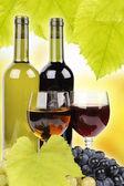 şarap şişesi, cam ve üzüm — Stok fotoğraf