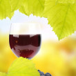 Grapes and glass of wine — Stock Photo